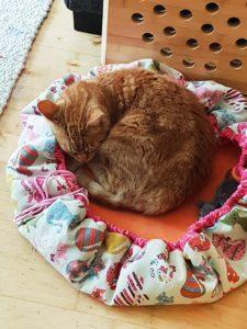 Hugo to go auch als Katzenkörbchen